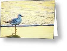 Beach Bird Greeting Card