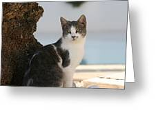 Beach Cat Greeting Card