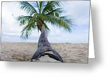 Beach Coco Greeting Card