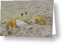 Beach Crab In Sand Greeting Card