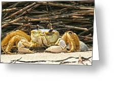 Beach Crab Greeting Card