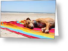 Beach Dreams Are Made Of These Greeting Card