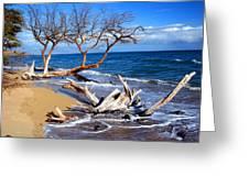 Beach Driftwood Fine Art Photography Greeting Card
