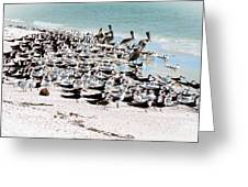 Beach Flock Greeting Card