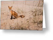 Beach Fox Greeting Card
