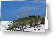 Beach Grass 3 Greeting Card