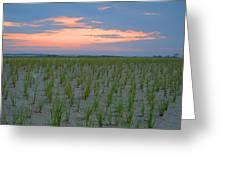 Beach Grass Farm Greeting Card