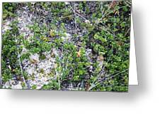 Beach Ground Cover Greeting Card