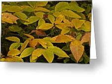 Beach Leaves Greeting Card