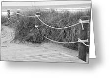 Beach Lines Greeting Card