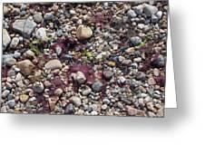 Beach Pebbles Greeting Card