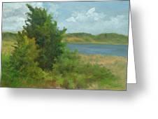 Beach Pines Greeting Card