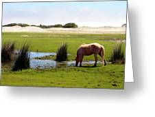Beach Pony Greeting Card