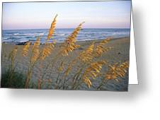 Beach Scene With Sea Oats Greeting Card by Steve Winter