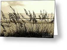 Beach - Sepia Greeting Card