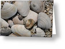 Beach Still Life Greeting Card
