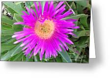 Pink Beach Succulent  Greeting Card