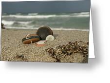 Beach Treasures 1 Greeting Card