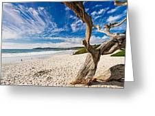 Beach View Carmel By The Sea California Greeting Card by George Oze