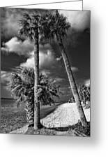 Beach Walk - Port Charlotte Beach Park, Florida Greeting Card