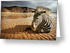 Beach Zebra Greeting Card
