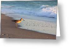 Beachcomer Greeting Card