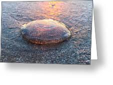 Beached Jellyfish Greeting Card