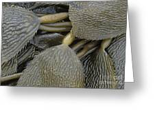 Beached Kelp Greeting Card