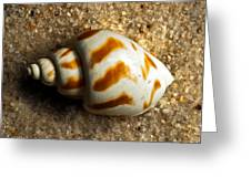 Beached Shell Greeting Card