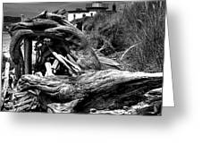 Beached Tree Stump Greeting Card