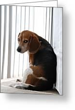Beagle Attitude Greeting Card