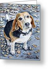 Beagle Nanni Greeting Card