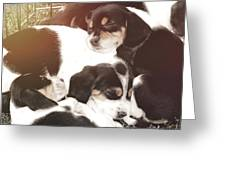 Beagle Pile Greeting Card