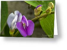 Beaked Butterfly Pea 9 Greeting Card