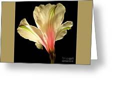 Beaming With Joy Greeting Card