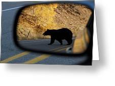 Bear Chance Greeting Card