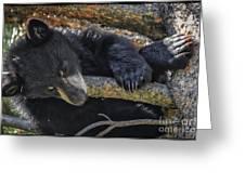 Bear Cub 2 Greeting Card