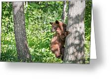 Bear Cub Climb Greeting Card