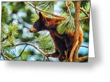 Bear Cub In A Tree 3 Greeting Card