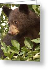 Bear Cub In Apple Tree1 Greeting Card