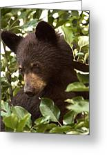 Bear Cub In Apple Tree2 Greeting Card