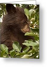 Bear Cub In Apple Tree3 Greeting Card
