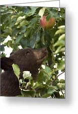 Bear Cub In Apple Tree4 Greeting Card