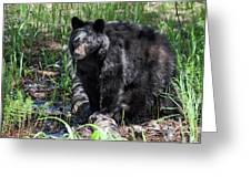 Bear Cub In Whistler Greeting Card