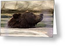 Bear Dip Greeting Card