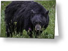 Bear Gaze Greeting Card