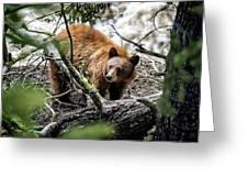Bear In Trees Greeting Card