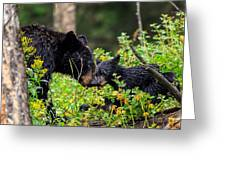 Bear Kisses Greeting Card