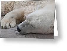 Bear Nap Greeting Card