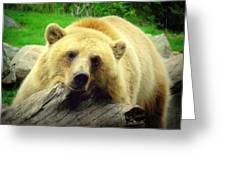 Bear On A Log Greeting Card